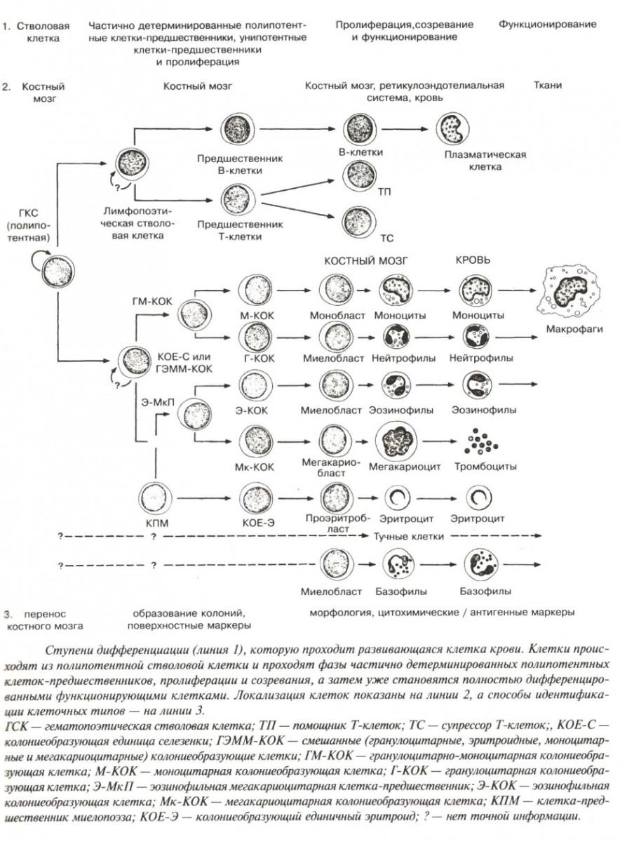 схема нервной системы собаки