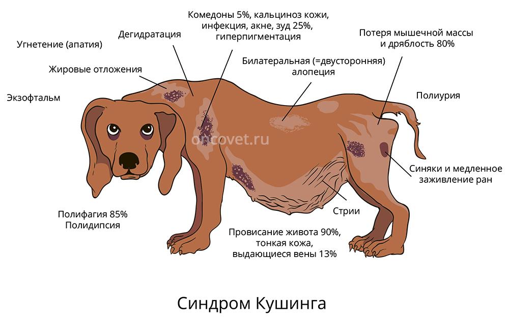Доктор Макарова | венеролог уролог сексолог андролог москва