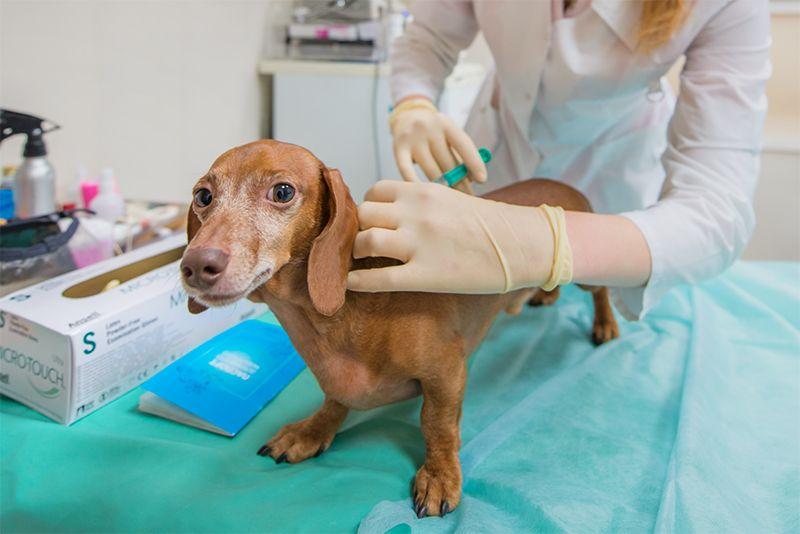 прививка от бешенства собаке глистов травить надо