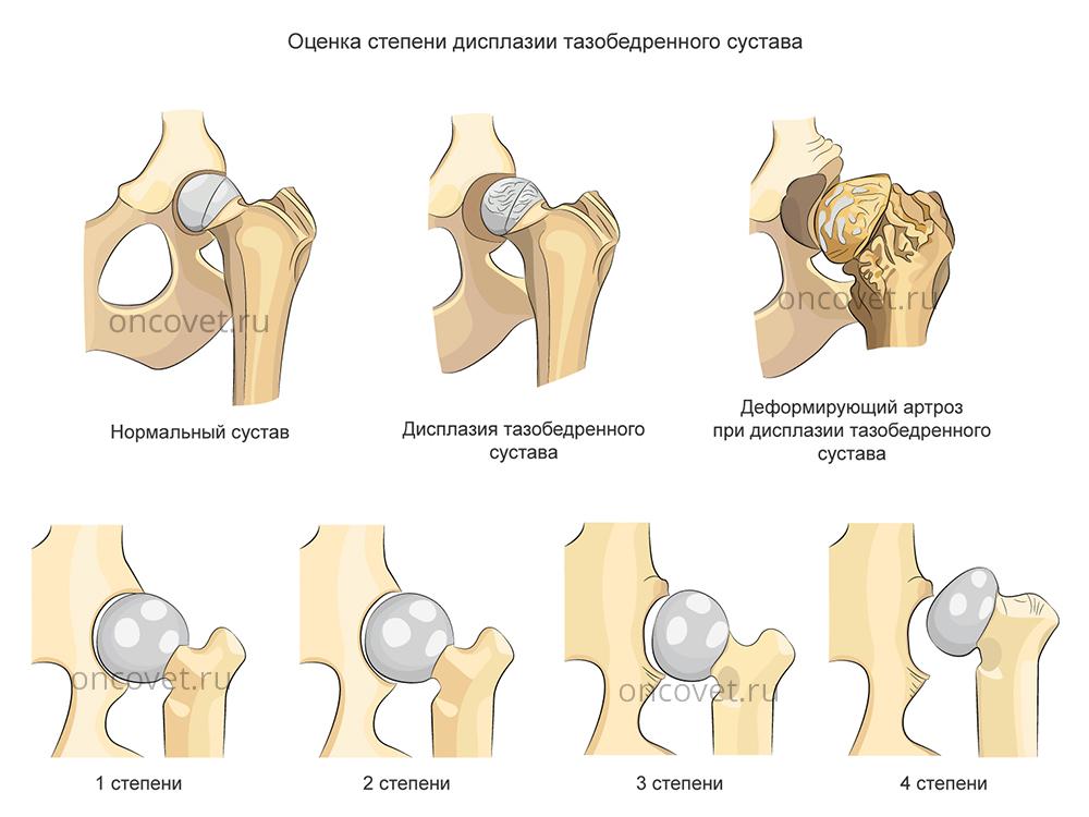 Ложный сустав бедра у собак при беге болит колено с внешней стороны