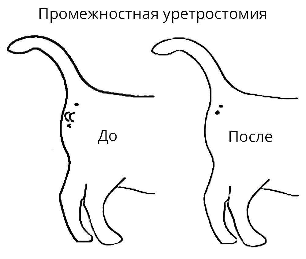 Уретростомии у кота цена