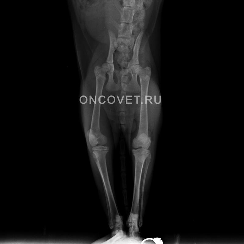 У собаки выскакивает коленный сустав защемлен нерв тазобедренного сустава